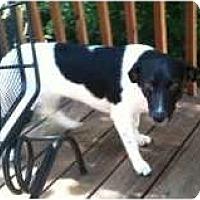 Adopt A Pet :: Massey - Bardonia, NY