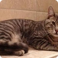 Adopt A Pet :: Petey - Raritan, NJ