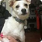 Adopt A Pet :: Farrah