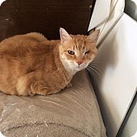 Adopt A Pet :: Jolly Roger (JK) - Mt Pleasant, PA