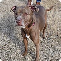 Adopt A Pet :: Annie - Nyack, NY