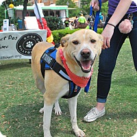 Adopt A Pet :: Bailey - Aubrey, TX