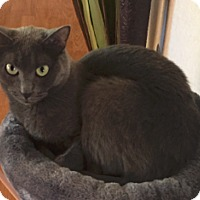 Adopt A Pet :: Maya - Tucson, AZ