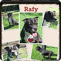 Adopt A Pet :: Rafy - Homestead, FL