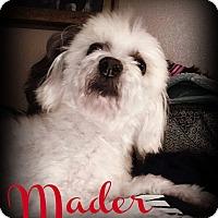 Adopt A Pet :: MADER - Phoenix, AZ