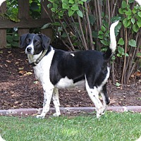 Adopt A Pet :: Maddie- Illinois - Wood Dale, IL