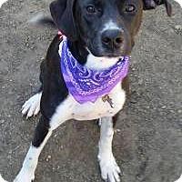 Adopt A Pet :: Sadie - Marlton, NJ