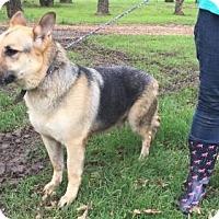 Adopt A Pet :: Sawyer - Fort Worth, TX