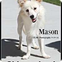 Adopt A Pet :: Mason - Elmhurst, IL