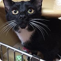 Adopt A Pet :: Romulus - Morganton, NC