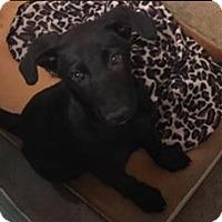 Adopt A Pet :: Noel - Pompton Lakes, NJ