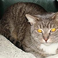 Adopt A Pet :: Lieutenant McSprinkles - Kalamazoo, MI