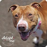 Adopt A Pet :: Rosie - Lyons, NY