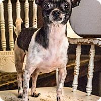 Adopt A Pet :: Alec - Yelm, WA