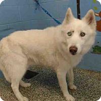 Adopt A Pet :: URGENT on 5/27 SAN BERNARDINO - San Bernardino, CA