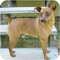Adopt A Pet :: Pawley - Springvale, ME