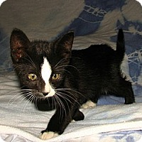 Adopt A Pet :: Frisco - Norwich, NY