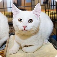 Adopt A Pet :: Lark - Irvine, CA