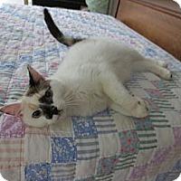 Adopt A Pet :: Kahlua - Easley, SC