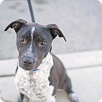Adopt A Pet :: Paisley - San Antonio, TX