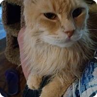 Adopt A Pet :: Raimi - Walla Walla, WA