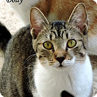 Adopt A Pet :: Dolly - Dallas, TX
