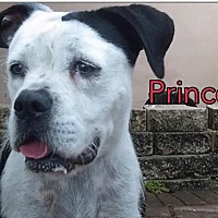 Adopt A Pet :: Princess - Miami, FL