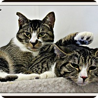 Adopt A Pet :: Lucky &Tidy - Dunkirk, NY