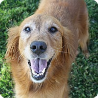 Adopt A Pet :: Sandy (and Ben) - Yorba Linda, CA