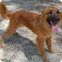 Adopt A Pet :: Dakota - Marlton, NJ