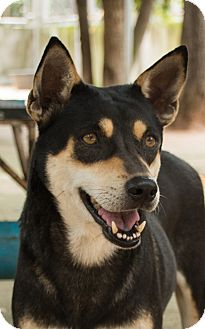Labrador Retriever/Terrier (Unknown Type, Medium) Mix Dog for adoption in Toronto, Ontario - Felicia