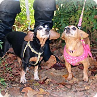 Adopt A Pet :: Addy and Penny - Yuba City, CA