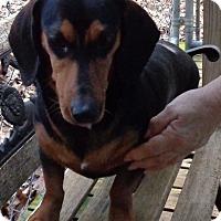 Adopt A Pet :: Max - Crump, TN