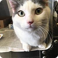 Adopt A Pet :: Pippin - East Brunswick, NJ