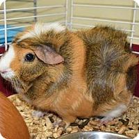 Adopt A Pet :: Twix - Greensboro, GA