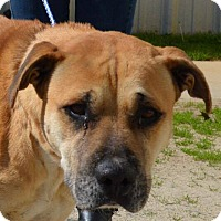 Hound (Unknown Type) Mix Dog for adoption in Southbury, Connecticut - Lane