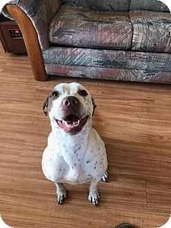 Pointer Mix Dog for adoption in Columbia, Maryland - Alina