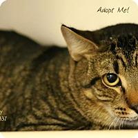 Adopt A Pet :: Mopsy - Camden, DE