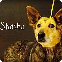 Shepherd (Unknown Type) Mix Dog for adoption in Defiance, Ohio - Shasha