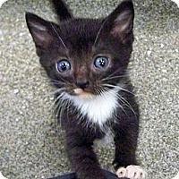 Adopt A Pet :: BW - Secaucus, NJ