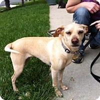 Adopt A Pet :: Blonde - Corona, CA