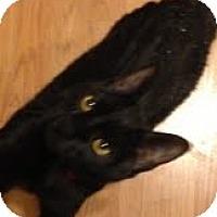 Adopt A Pet :: Blackjack - Modesto, CA