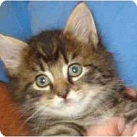 Adopt A Pet :: Blueberry - Richmond, VA