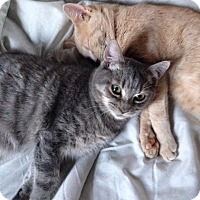 Adopt A Pet :: Jesse - Simpsonville, SC