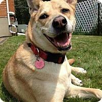 Adopt A Pet :: Loki - Caledon, ON