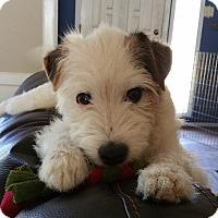 Adopt A Pet :: Henry In Houston ADOPT PENDING - Houston, TX