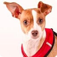 Adopt A Pet :: Nana - San Ramon, CA