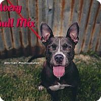 Adopt A Pet :: Avery - Cheney, KS
