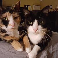 Adopt A Pet :: Lacy - Lauderhill, FL