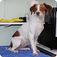 Adopt A Pet :: TN/Moxie - Mount Dora, FL